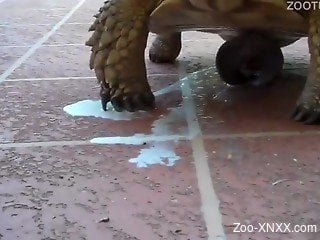 Close-up action with a sexy-ass turtle, incredible