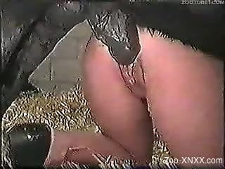Short-haired redhead sucking a black dog's cock