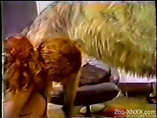 Chicks making out with each other and sucking dog's cock
