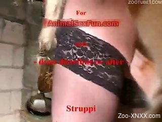 Black stockings beauty gets banged by a hung dog