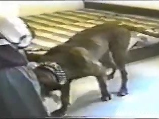 Dark-haired chick gets drilled hard by her dog
