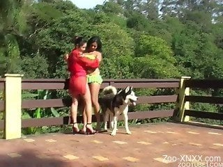Black-haired babe gets her mouth fucked by the dog