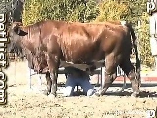 Giant muscled cow and perverted farmer have nice animality XXX