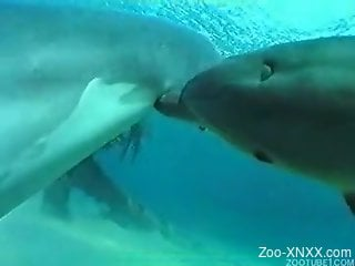 Hot video in which two pretty dolphins make love in the sea