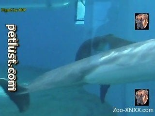 Dolphin is getting very excited playing with ball