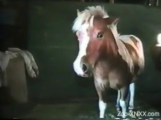 Gay dude really wants this pony to fuck his asshole on camera