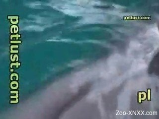 Dude jerks this dolphin's oddly-shaped penis in front of the cam