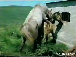 Retro bestiality video with subtitles and hot unhinged sex