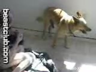 Nasty little slut enjoying hardcore sex with a dog