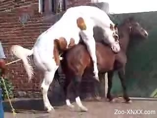 Two horses enjoy a hardcore romp by the gates