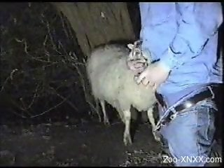 Denim-clad farmer face-fucking a sexy sheep on cam