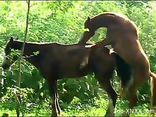 Two horses enjoy hardcore outdoors sex right here