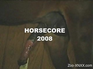 Intense and hardcore horse sex videos from 2008