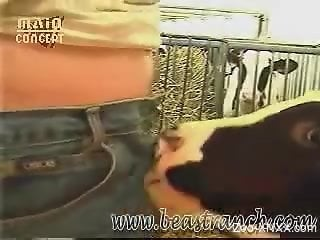Cute cow sucks on this guy's throbbing boner