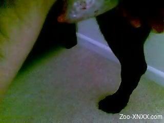 Guy loves jerking the dog in insane XXX zoophilia scenes