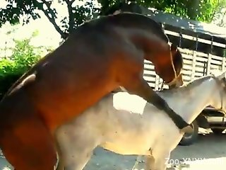 Horses fuck while animal porn lover sits and admire the view
