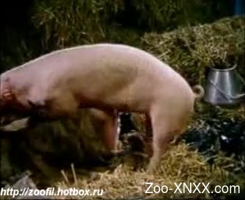 Pig fucks ass and pussy in zoophilia cam scenes