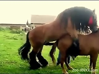 Man tapes two horse fucking and that's making him horny
