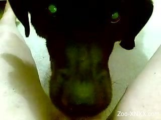 POV oral with an extremely sexy-looking black dog