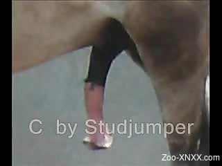 Compilation of horse cock porn videos for you