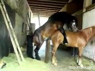 Horny stallion fucking a mare's tight pink cunt