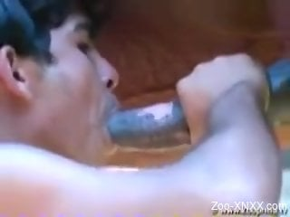 Spunky Latino twink getting fucked by a horse