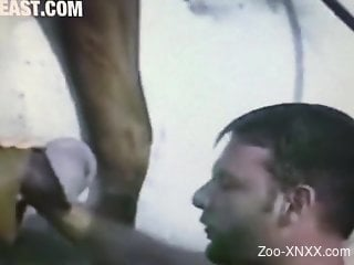 Horny gay dude helping two horses fuck on camera