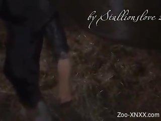 Voyeur zoo porn video focusing on a horse cock