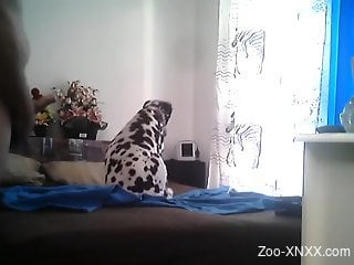 Perverpted zoophile is filming a cute dalmatian