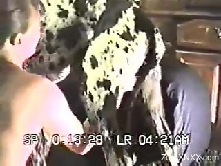 Sexy Dalmatian gets a blowjob from an amateur babe