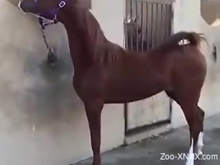 Sexy mare showcasing its beautiful pussy here