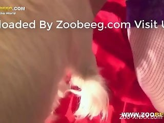 Fishnets-wearing beauty jerking a dog's red cock