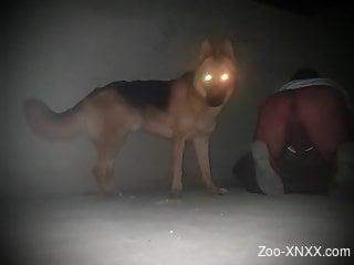 Dog with glowing eyes fucks a chubby gay bottom