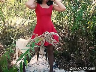 Brunette in red getting fucked by two dogs at once