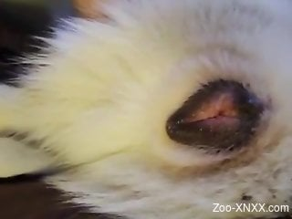 Sexy animal pussy getting fingered for the camera
