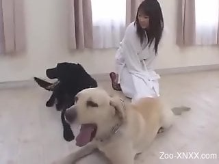 Awesome doggy fuck with a Japanese zoo enthusiast