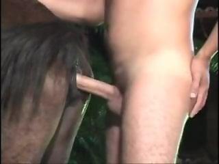 Sex With Animals Vedio Porn Videos